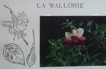 La Wallonie