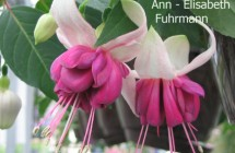 Ann-Elisabeth Fuhrmann