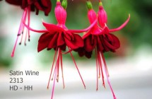 Satin Wine
