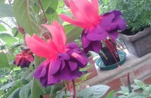 Fleurjoux